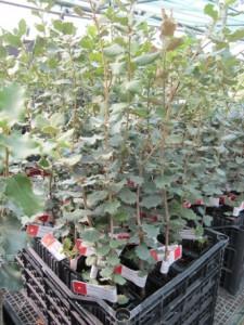 caisseplants