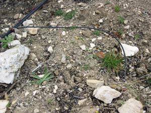 Une tige en fer inséré au bout du capillaire permet de le piquer au sol