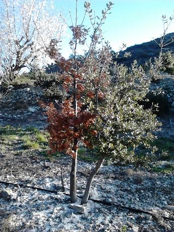 2 plants plantés à 20 cm de distance
