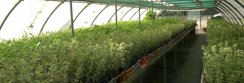 Nos Plants truffiers